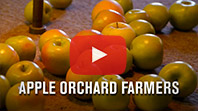 Apple Orchard Farmers