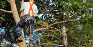 Working with Nature: Safety Tips for Handling Forestry Tools & Equipment
