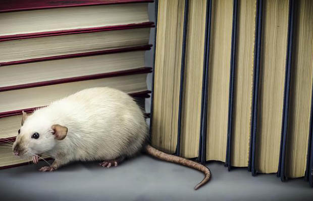 Reduce Rodent Risk Using Exclusion Best Practices