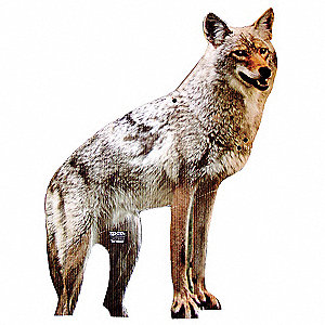 Coyote, 2-D, Used For Goose, Duck and Rodent Control