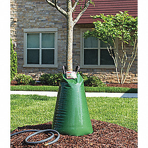 watering bag tree
